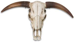 Horned Skull Wall Display